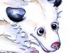 Opossum, die Skizze